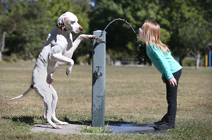 純粋な心をもった動物とこどもたちの心あたたまる素敵な画像20選