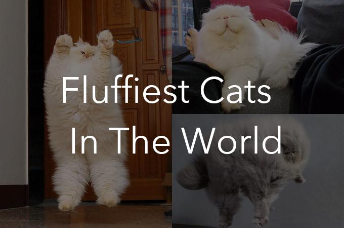 私たちを幸せな気持ちにさせてくれる可愛いふっくら猫ちゃん19選