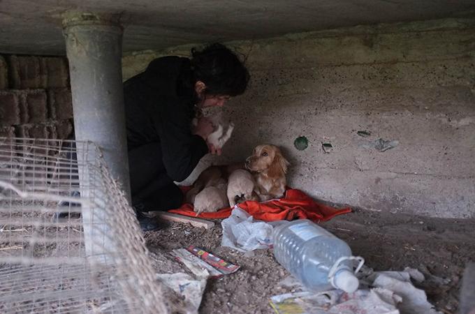 棄てられた犬の親子に新しい暖かい家族が見つかるまで