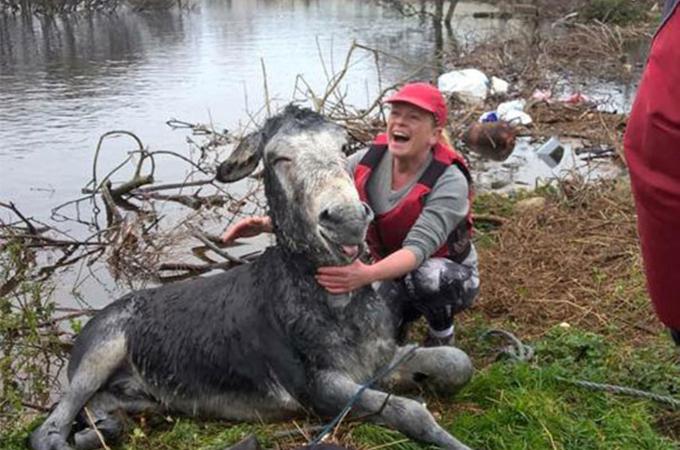 川で溺れる一頭のロバを救出するため大勢の人が協力する姿に感動