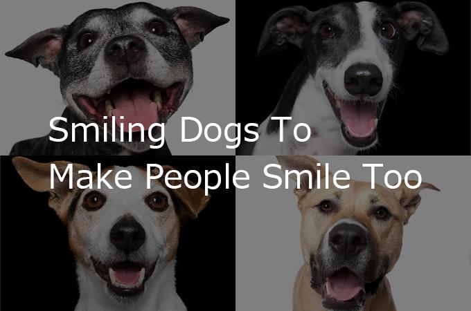 私たちを笑顔にしてくれる犬たちの癒し笑顔画像17選