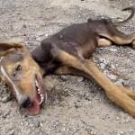 道端で死亡したと思われていた子犬が尻尾を振り助けを求める
