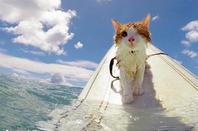 片目を失うも保護され元気になった子猫の特技はサーフィン