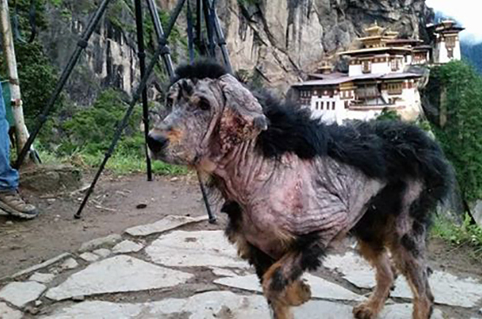 治療を必要とする犬が1人の旅行者によって保護され生まれ変わるまで