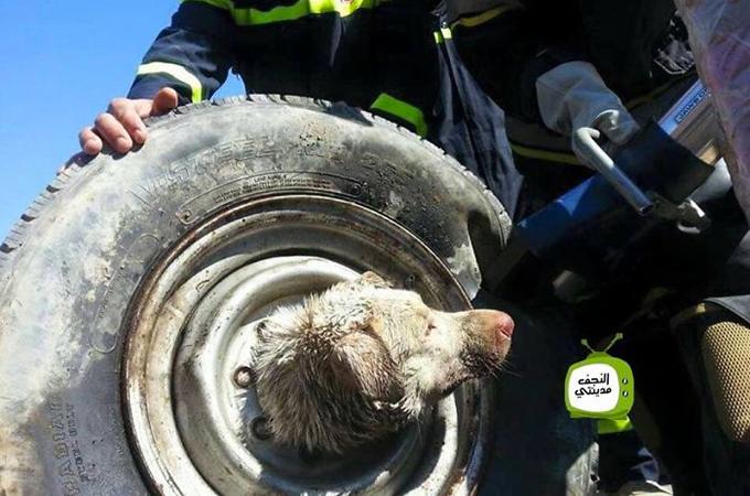 タイヤから首が抜けなくなってしまった犬が発見され無事救出される