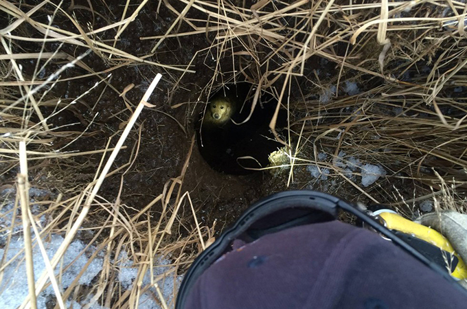 狭くて深い穴の底へと閉じ込められてしまった犬の大救出劇