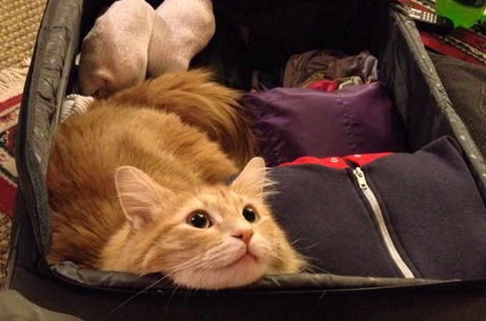 飼い主さんの旅行にどうしてもついて行きたい犬や猫たちの画像26選