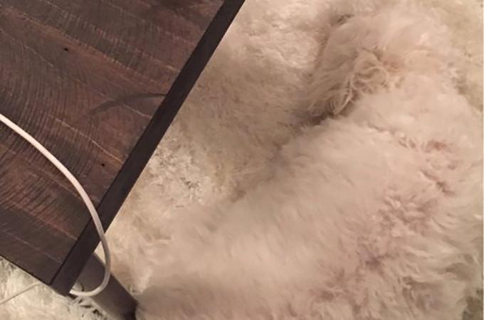 カメレオンにも負けない!ほとんど見えない犬たちの画像24選