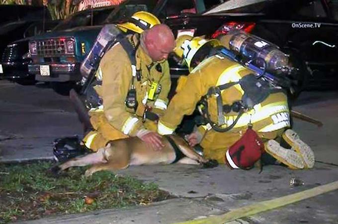火災で死のふちをさまよっていたブルドッグを命がけで救った消防士