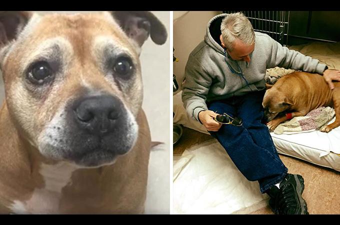 ホームレス男性の愛犬を救うため一人の男性が立ち上がる
