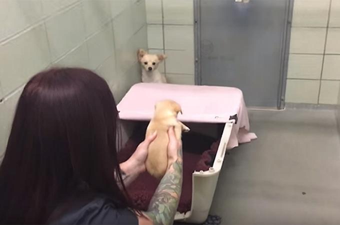 出産後に子犬を残し飼い主から捨てられた母犬が再び我が子と出会う