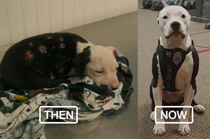 火災から救い出された1匹の犬が自身の経験をもとに消防士になる