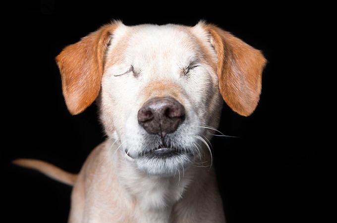 虐待や障害と言う逆境を乗り越えた力強く美しい犬や猫たち