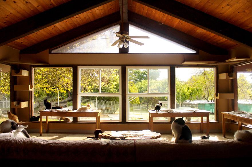 20,000匹以上の猫と、7,000匹以上の犬の命を救ってきたカリフォルニア最大級の保護施設