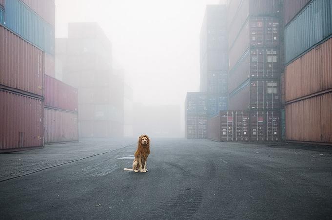 ゴミ捨て場で発見されたホームレス犬が魔法の写真で勇敢なライオンに