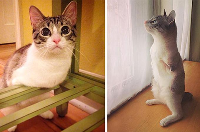 生まれつき前脚がない猫のハンデを物ともせず遊ぶ姿が勇気をくれる