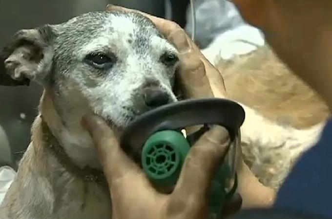 炎に包まれた建物に閉じこめられていたのは34匹の犬たち