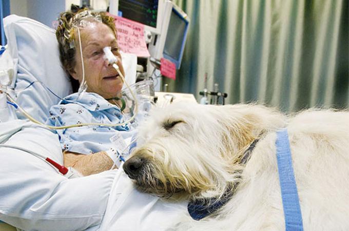 ペットが、病気で入院する飼い主さんのお見舞いが出来る病院