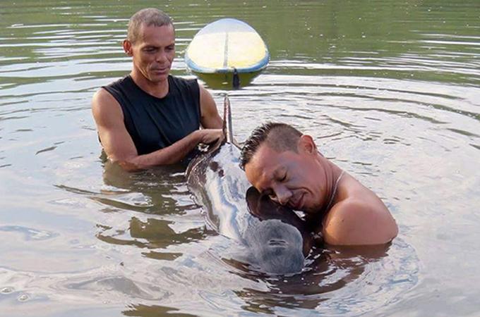 浅瀬で身動きが取れなくなったクジラが鳴き声で助けを求める!