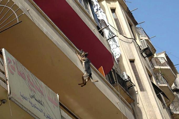 自由を夢見てベランダから飛び降り鎖で宙吊りになってしまった犬