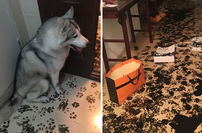 飼い主さんのいないわずか3時間でアパートをリデザインする天才犬