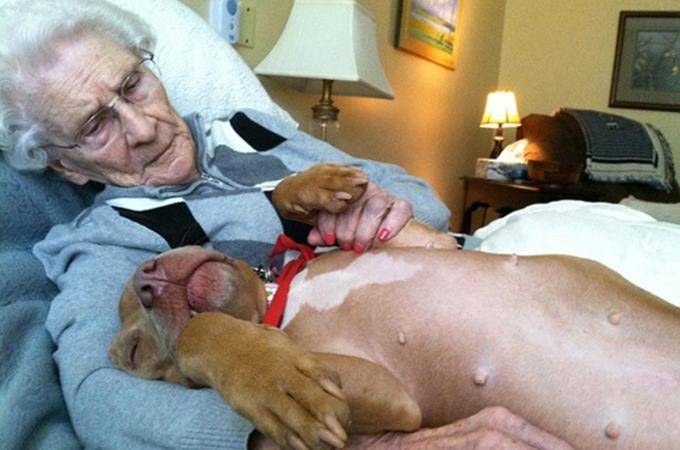 セラピー犬が私たち人間にくれる素晴らしい力を写しだした画像29選