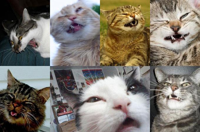 【猫好き必見】猫がくしゃみをする瞬間が人間とまったく一緒でほっこりする写真まとめ