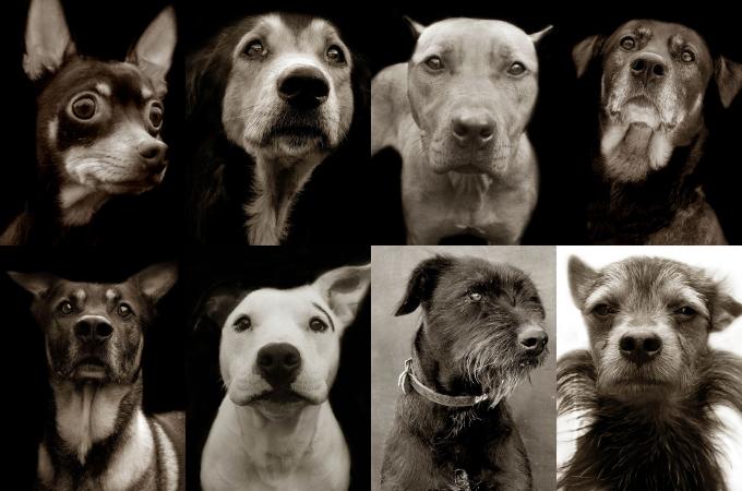 人間に見捨てられ、行き場をなくした動物たちの悲しい表情を撮影する続ける写真家