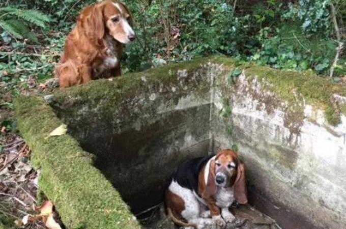 2匹の犬が行方不明に!貯水庫に落ちた1匹の犬のそばで、1週間も寄り添う犬に感動