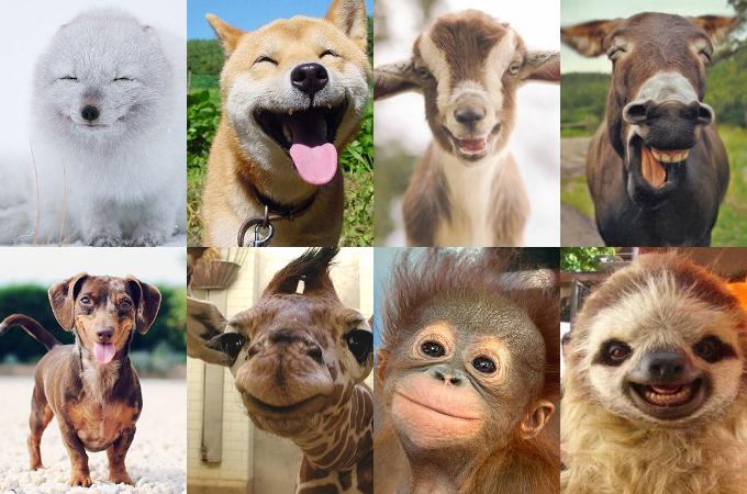 かわいい動物たちの最高の笑顔に癒されること間違いなしの画像33選