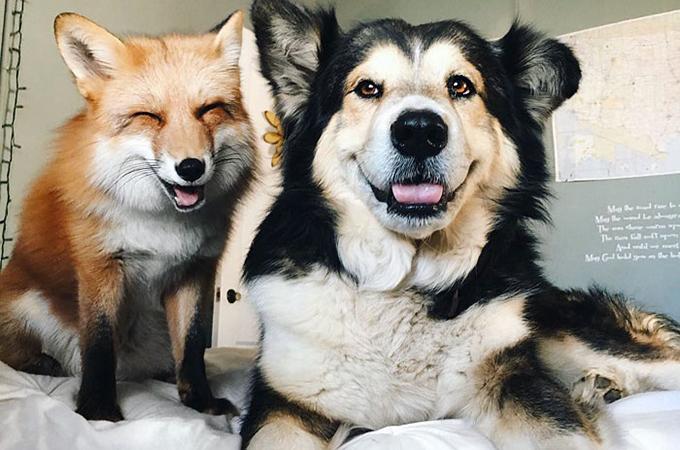 保護犬ムースと親友になったキツネのジュニパーの素敵な笑顔が話題に