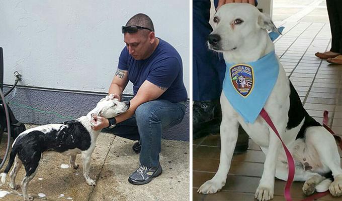 虐待を受け栄養失調の身体で彷徨い歩き自らの足で警察署を訪ねてきた犬