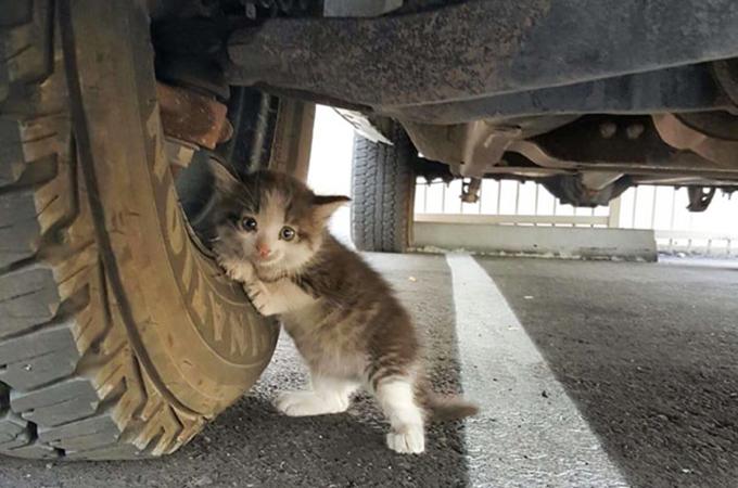 飼育放棄され怯えきった姿でトラックにしがみつく子猫が見つかる