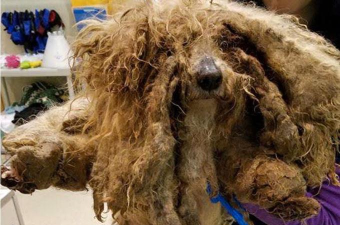 犬とは認識出来ないほど毛がからまり誰からも見向きされなかった犬