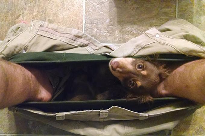 プライベートお構いなし!トイレだろうがどこでも一緒にいたい犬たち