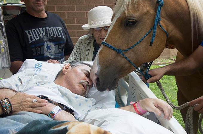 最愛の調教師に「さよなら」を言うために病院を訪れた2頭の馬たち