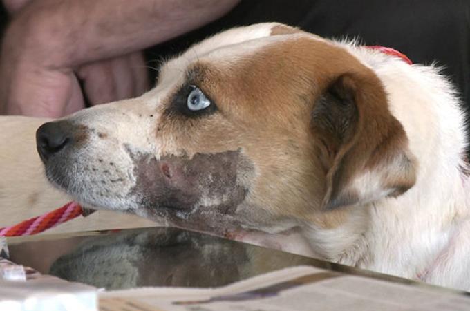 ターゲットの練習として射撃され湖に捨てられた1匹の犬
