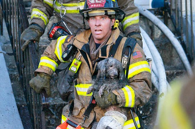 動物を救うために自らの命を危険にさらし救助にあたる勇敢な消防士
