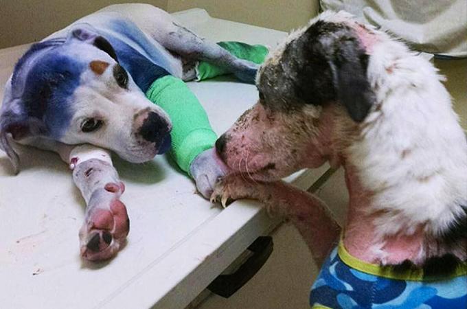 地獄のような虐待を受けた犬同士が手を取りあう姿が話題に!