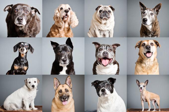施設で暮らす12匹の老犬。1人の女性の行動によって、無事に全匹里親が見つかる