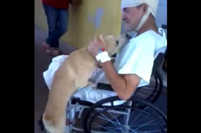 路上で襲われ緊急入院した飼い主さん!8日後の再会で思わずはしゃぐわんこ