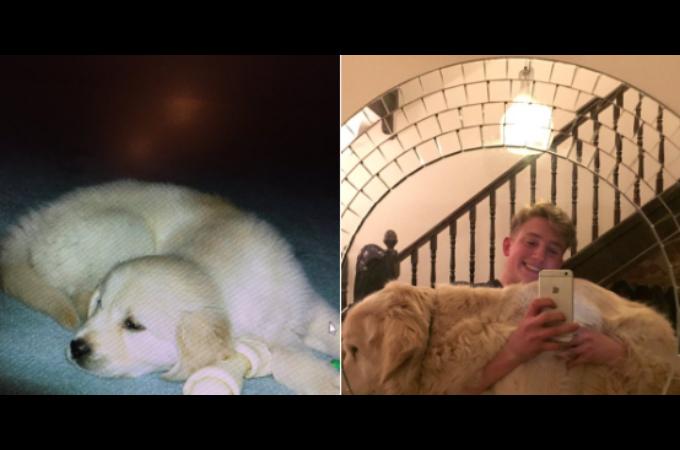 がんにより余命1年と宣告された子犬。それから13年たった現在の姿に絶賛の嵐