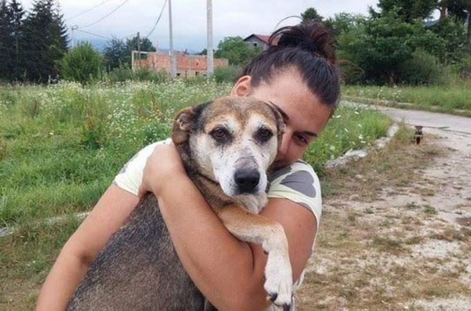 高速道路で野良犬とみられる犬を見かけた女性。彼女の行動力とその犬が導くその先には…