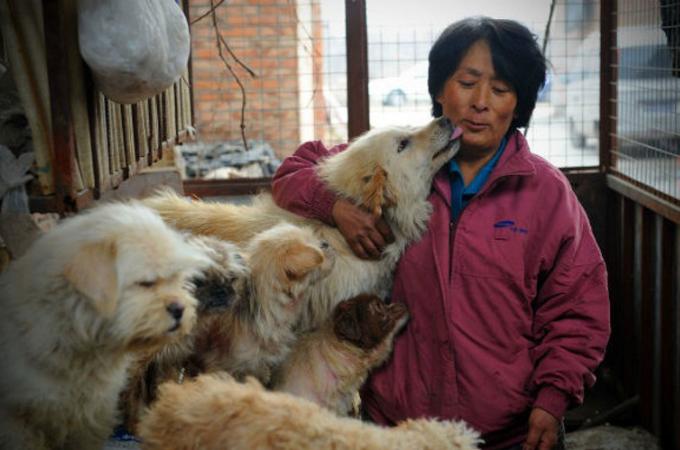 中国の伝統行事「犬肉祭」。その犬たちを救うため1人の女性のとった行動