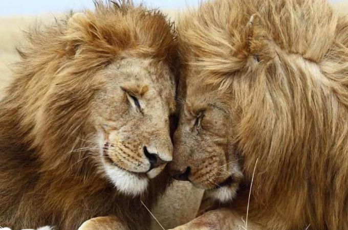 【画像】頬や体を寄せ合う動物たち