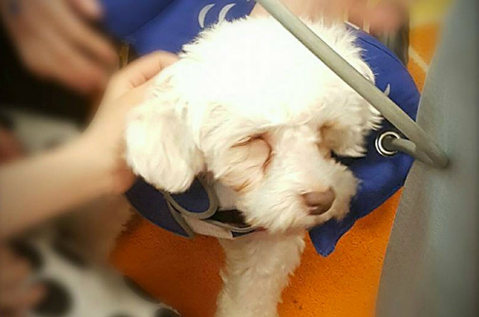 生まれつき目がなく、変形した脚の犬が多くの人々に生きる力を与える