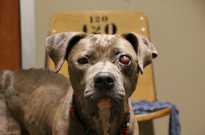 眼に腫瘍を患いひどい飢えに苦しむホームレス犬が奇跡的な回復を見せる
