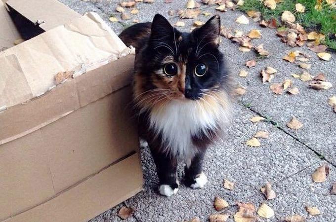 ひどく人間に怯え、さらには栄養失調により盲目となった野良猫