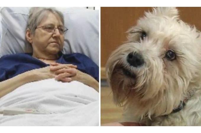 嗅覚だけを頼りに飼い主さんの入院する病院へ辿り着いたシシー