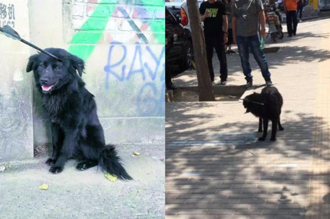 頭部に矢が刺さった状態の野良犬。地下鉄を徘徊しているところを保護される